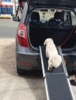 Dog going up ramp